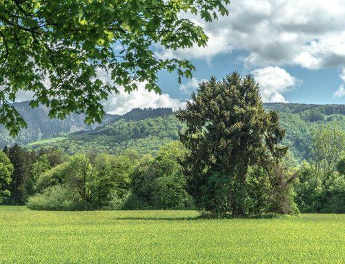 Morzger Naturdenkmäler