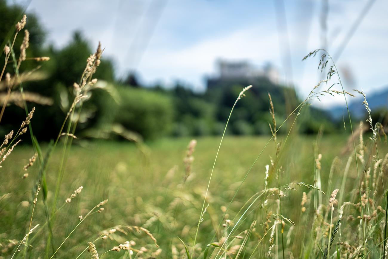 Feld mit Blick Richtung Festung (c) STADTBEKANNT Zohmann