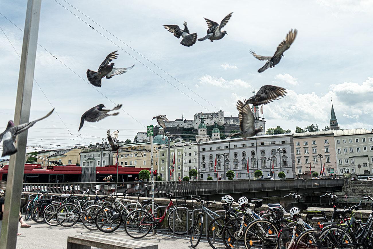 Tauben bei der Staatsbrücke (c) STADTBEKANNT Zohmann
