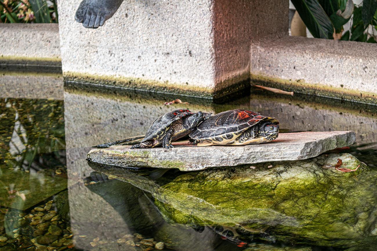 Schildkrötenidyll in der Orangerie (c) STADTBEKANNT Zohmann