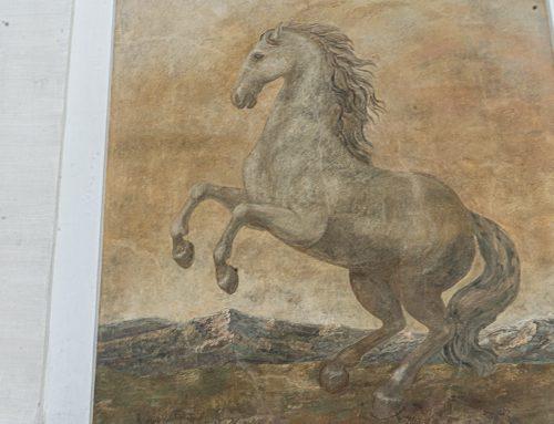 Pferde-Geschichten aus Salzburg