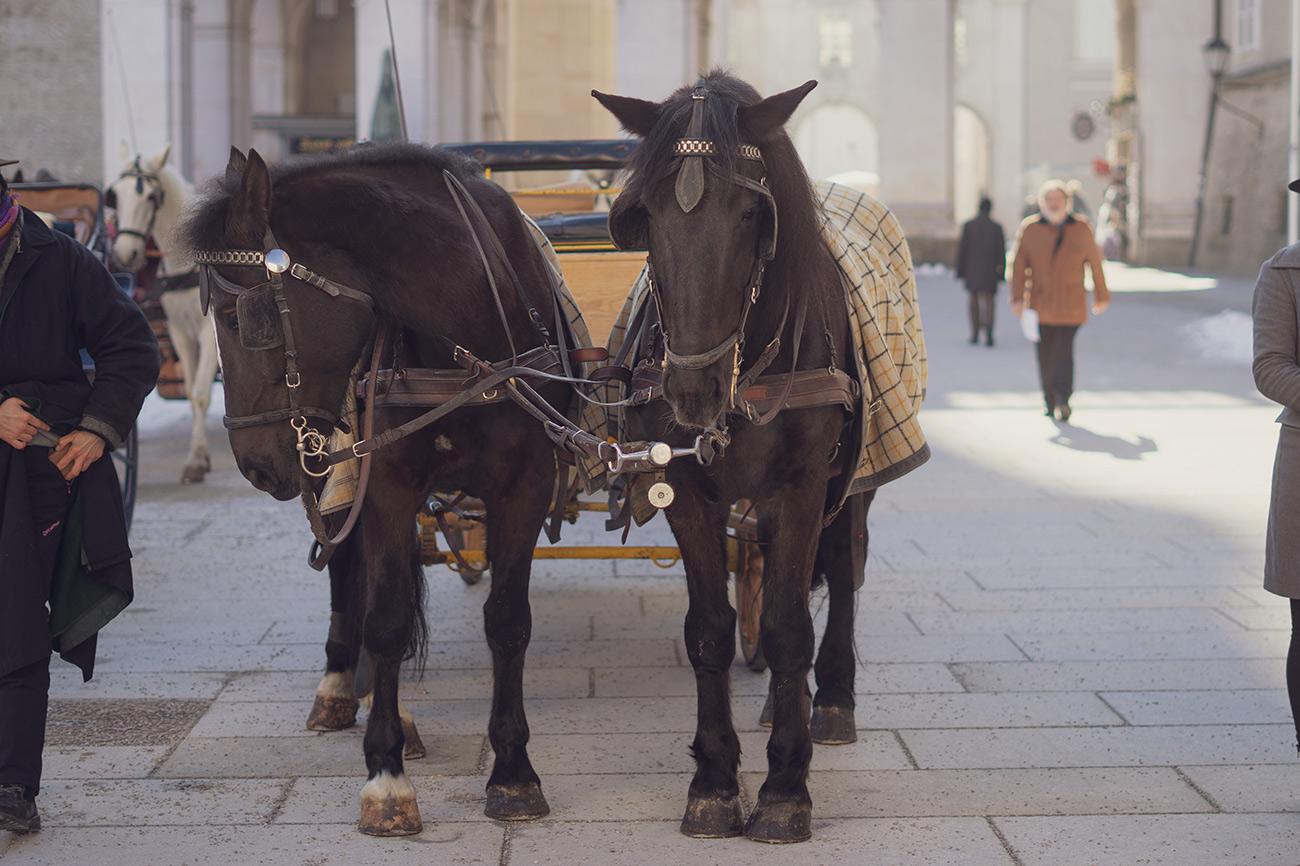 Fiaker-Pferde am Residenzplatz (c) STADTBEKANNT Zohmann