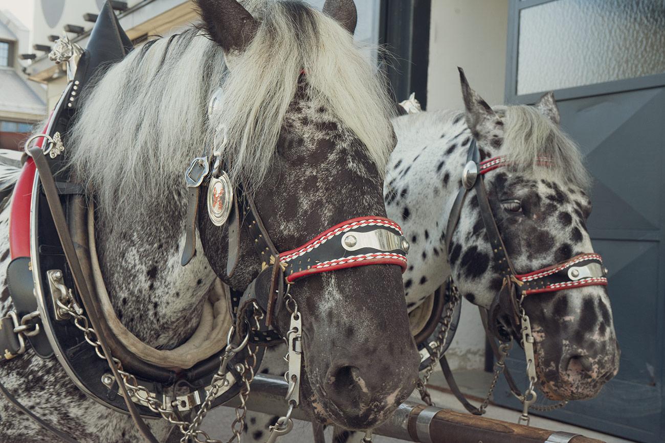 Stiegl-Pferde im Dienst (c) STADTBEKANNT Zohmann