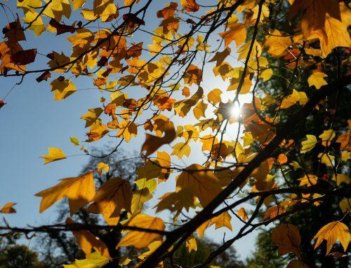 Tipps für den Herbst in Salzburg